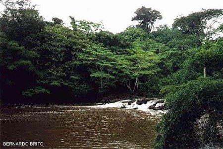 Parque Nacional do Amazonas